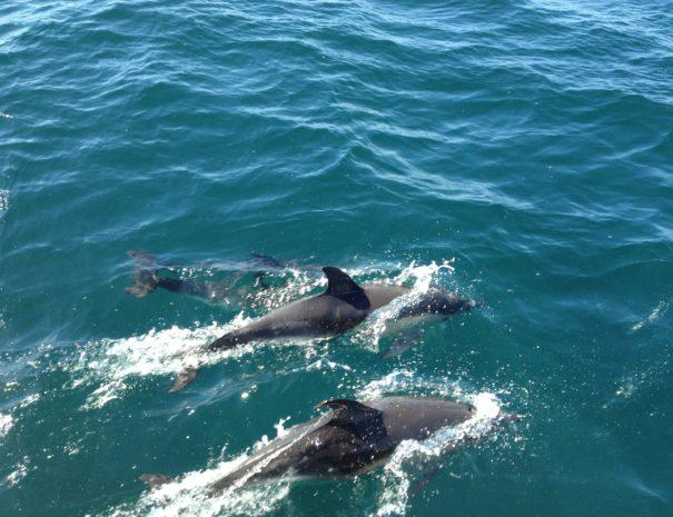 Dolfijnen Gibraltar