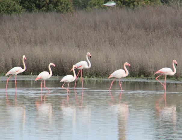 Flamingo;s laguna de Fuente de Piedra